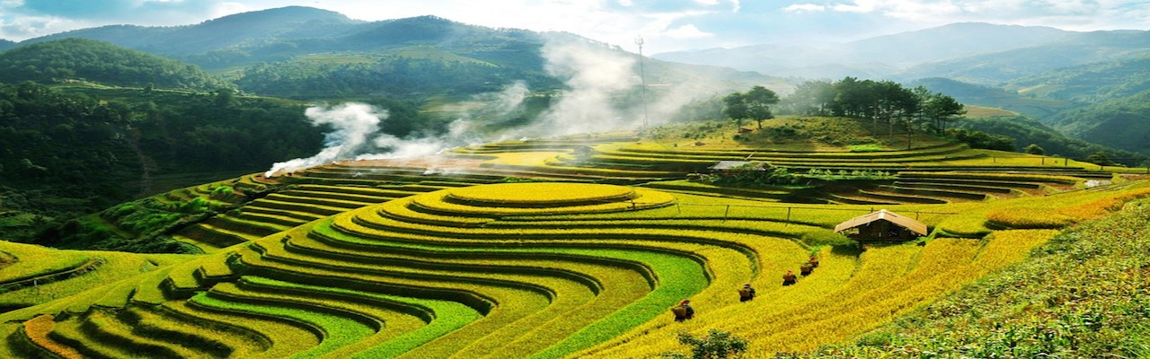 Vietnam Terrace Field