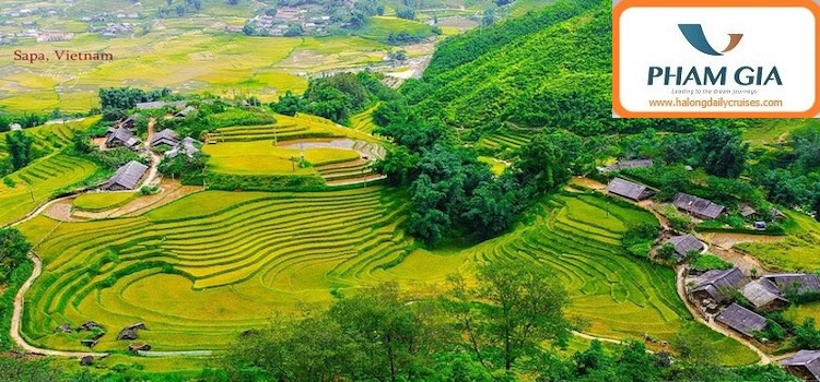 Sapa trekking 3 days 2 nights (hotel and homestay)
